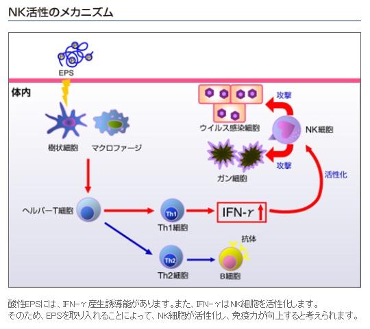 NK活性のメカニズム.jpg